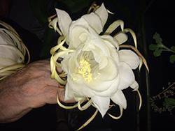 Sai Baba Favourite Flower | Best Flower Site